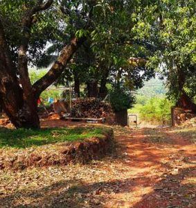 Have the Fun of your own Mango Farm Plots in Konkan""