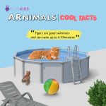 SCIFIKIDS – ARNIMALS New Version Augmented Reality Educational Kit(IOS&Android)