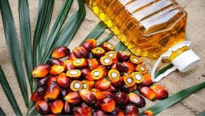 Read more about the article Malaysia intends to end all extension of palm oil estates