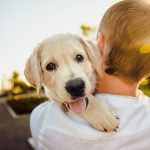 Hemp CBD for Dogs – How and Why It Works